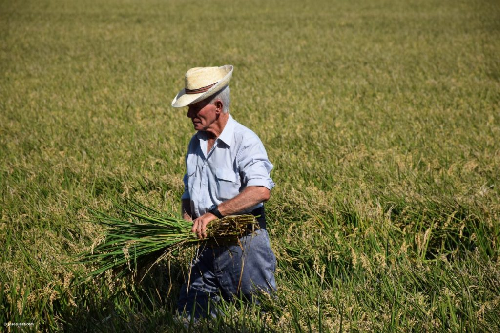 El cultivo del arroz en la Albufera «ayuda a sostener un uso adecuado en los ecosistemas originales»